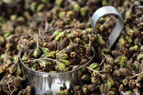 oregano spice herbs