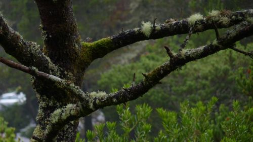 oregon pacific northwest tree