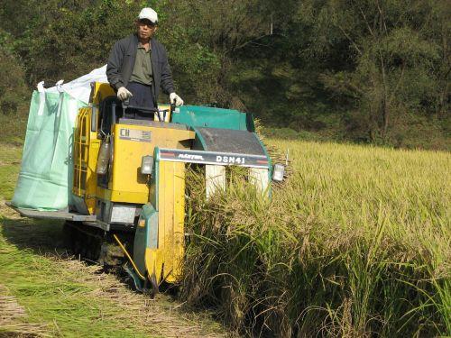 organic rice combine