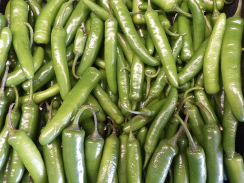 Organic Chili Peppers