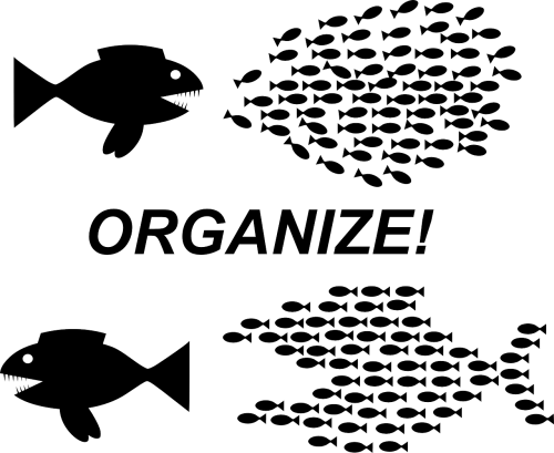 organization teamwork fish