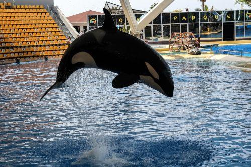 orka orcashow loropark