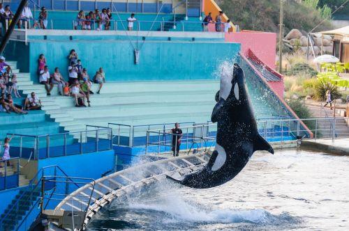 orka killer show