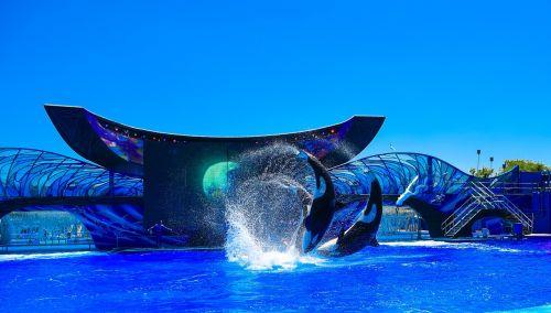 orlando florida whale