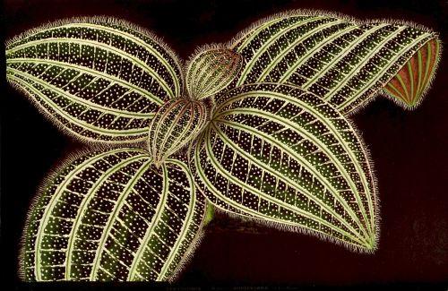 ornamentinis butas,žaluma ir balta žaluma,žalias,apdaila,deko,lapai,augalas,juodas fonas,fonas,gamta,tapetai