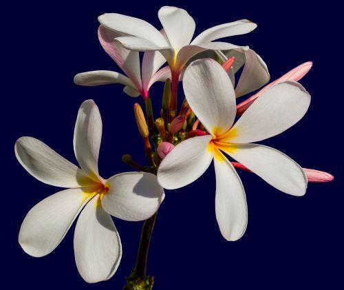 ornamental flower blossom bloom