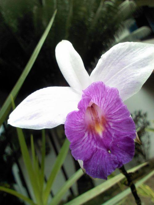 orquidea forest mata atlantica