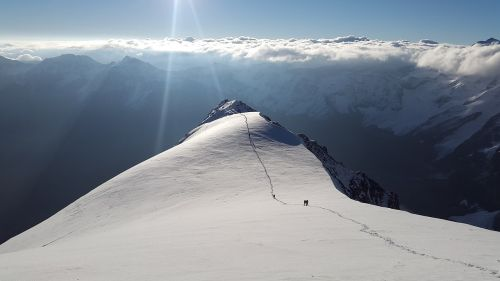 ortler high-altitude mountain tour hintergrat