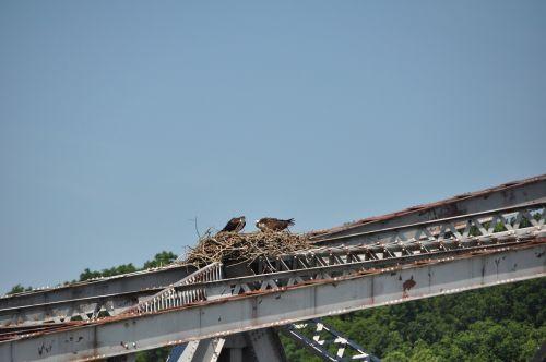 ospreys old bridges birds