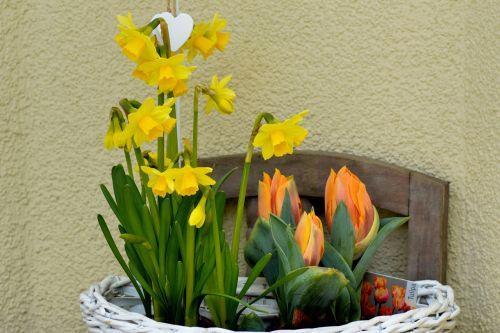 osterkorb tulips daffodils