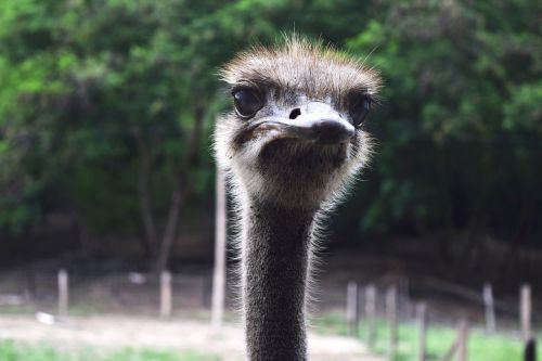 ostrich peak ave