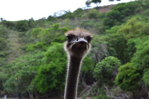 ostrich neck eyes