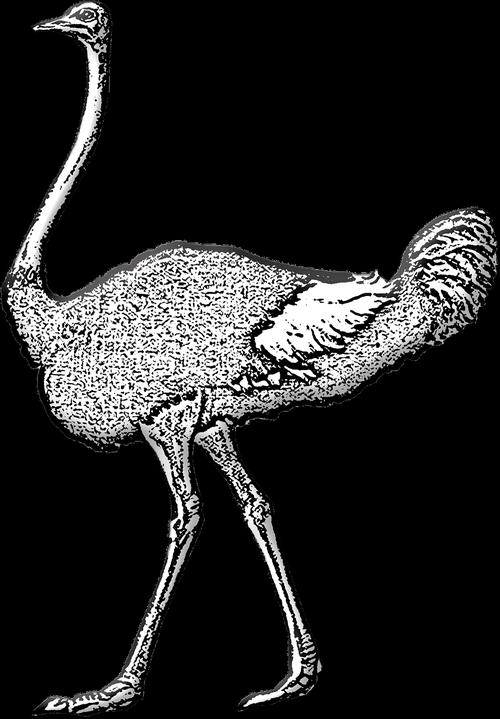 ostrich  wild bird  bird