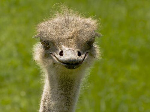 ostrich bird ostrich bouquet