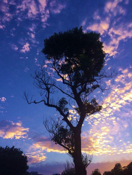 otsu park sunset autumn