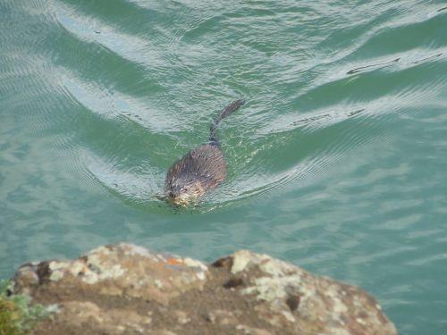otter canada yukon