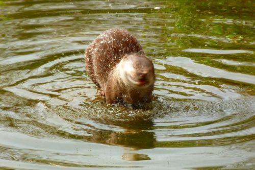 otter wildlife park zoo