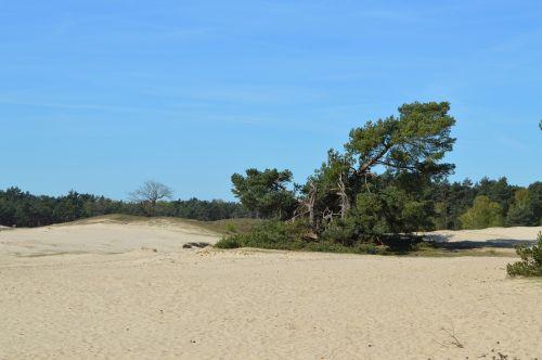 otterlo veluwe sand dunes