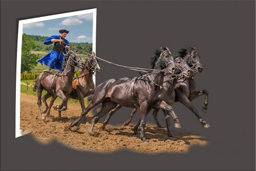 out of bounds image editing horses
