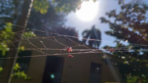 outback country spiderweb