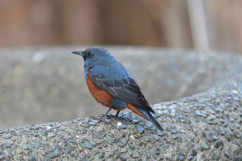 outdoors bird wild animals
