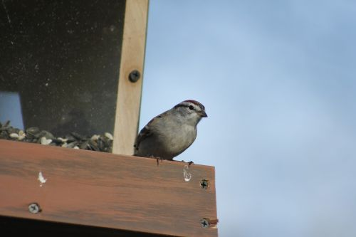 outdoors bird nature