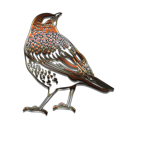 outline bird beautiful