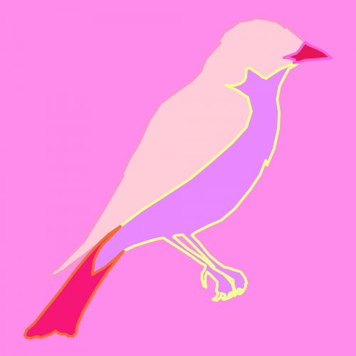 Outlined Bird