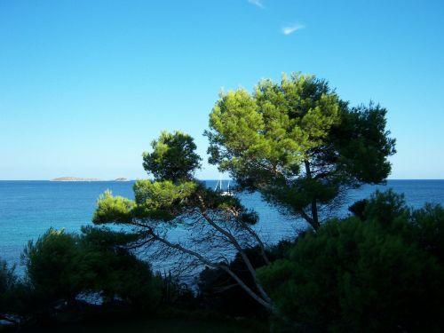 outlook sea tree
