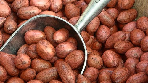 Oval Red Pecans