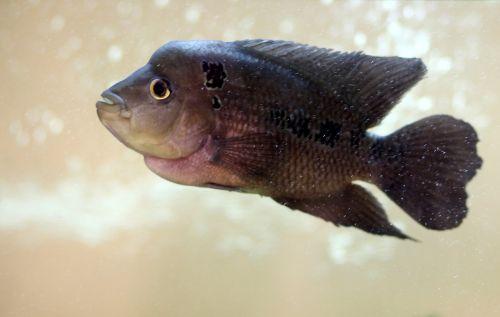 over aquarium exotic fish