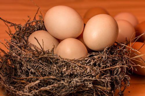 crowded nest egg