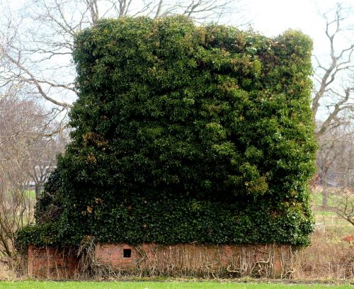 overgrown turfed building