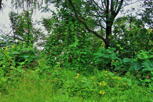 Overgrown Trees And Weeds