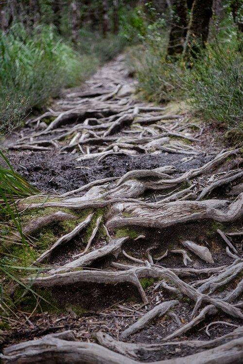overland track  tasmania  national park