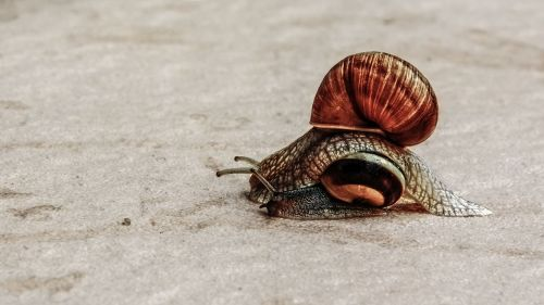 overtaking snail slowly