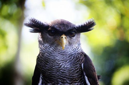 owl close up bird