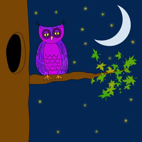 owl purple night