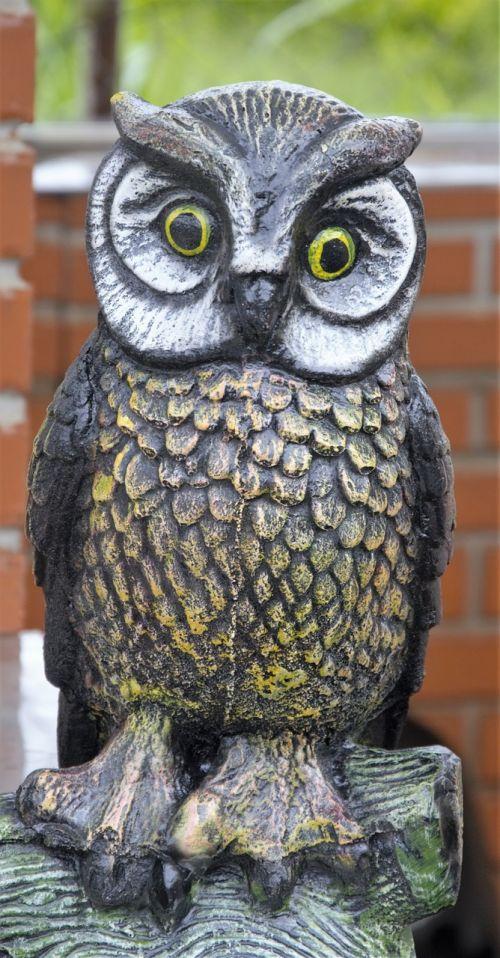 owl garnish wisdom
