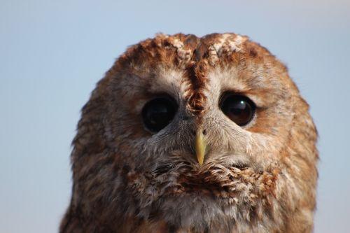 owl bird wild life