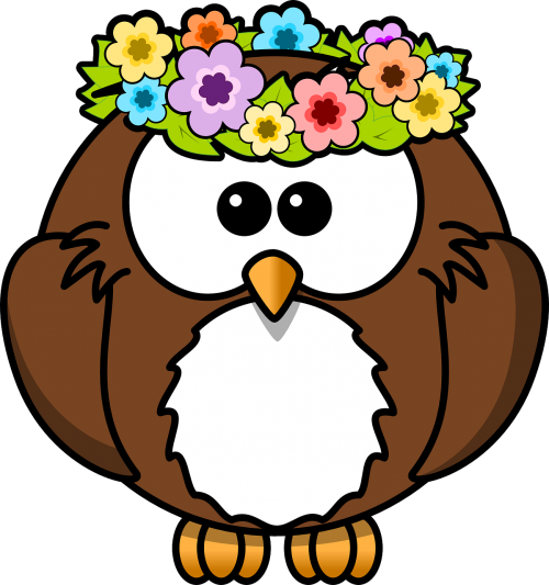 owl animal bird