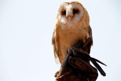 owl zoo elegant