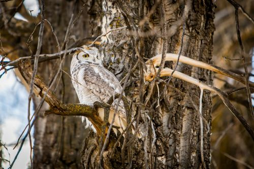 owl nature wildlife