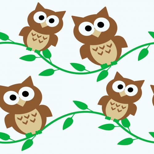 owl owls cartoon