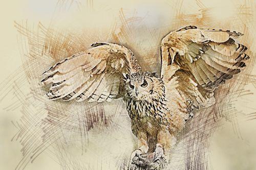 owl wildlife bird