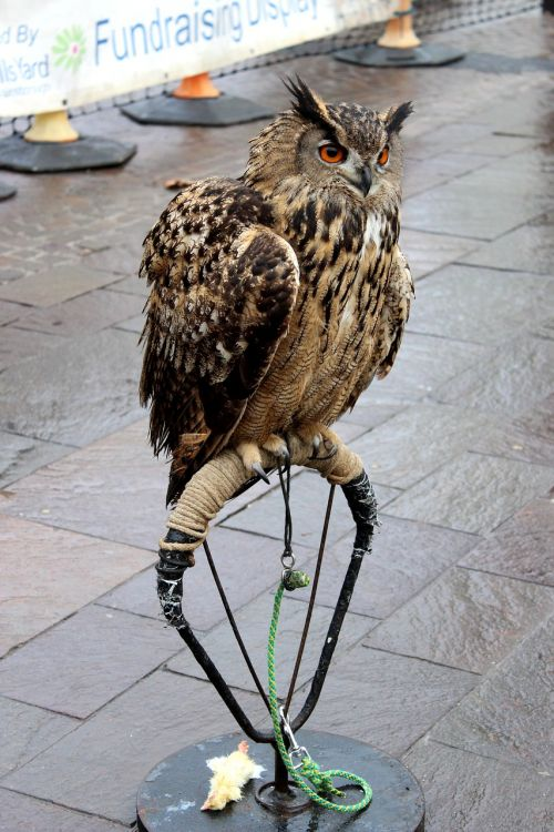 owl bird shelter