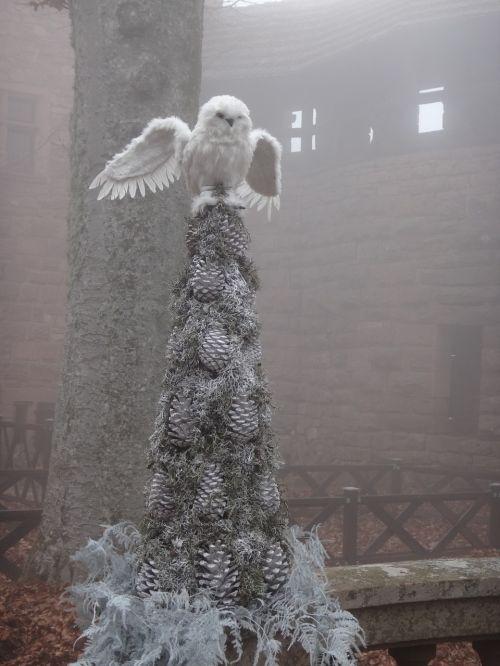 owl atmosphere misty