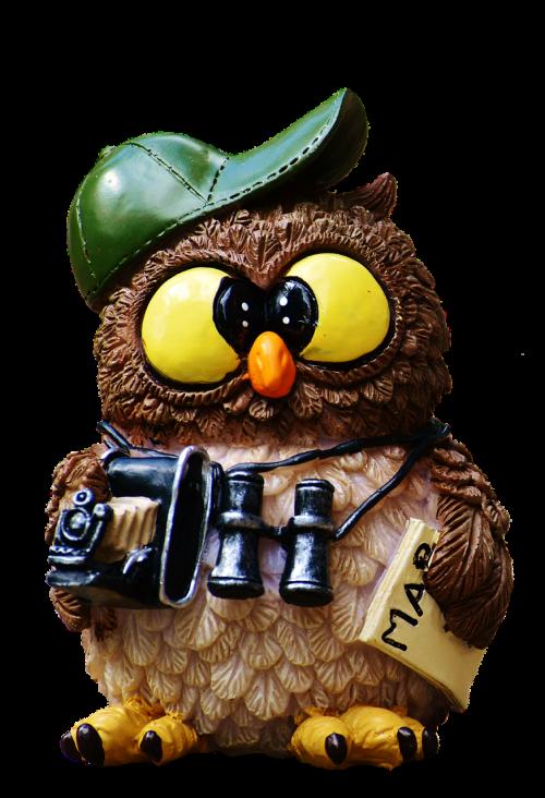 owl tourist camera