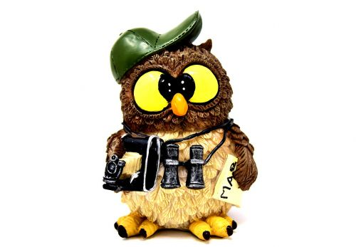 owl photographer photograph