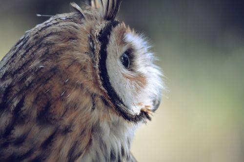 owl bird head